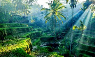 Остров Бали в любопитни факти