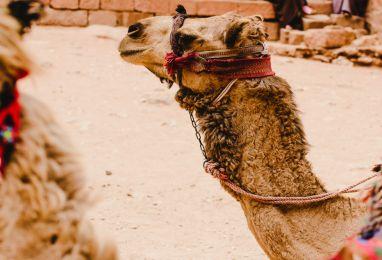 ▷ Почивка в Йордания за 7 нощувки - Hermes Holidays
