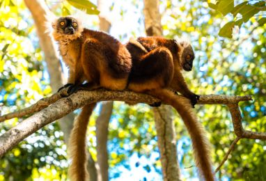 ▷ Екскурзии до Мадагаскар - Hermes Holidays