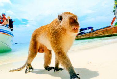 ▷ Топ цени Тайланд, Као Лак - Hermes Holidays